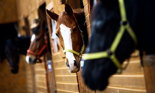 Stable Owners Jockey with ICE over I-9 Compliance