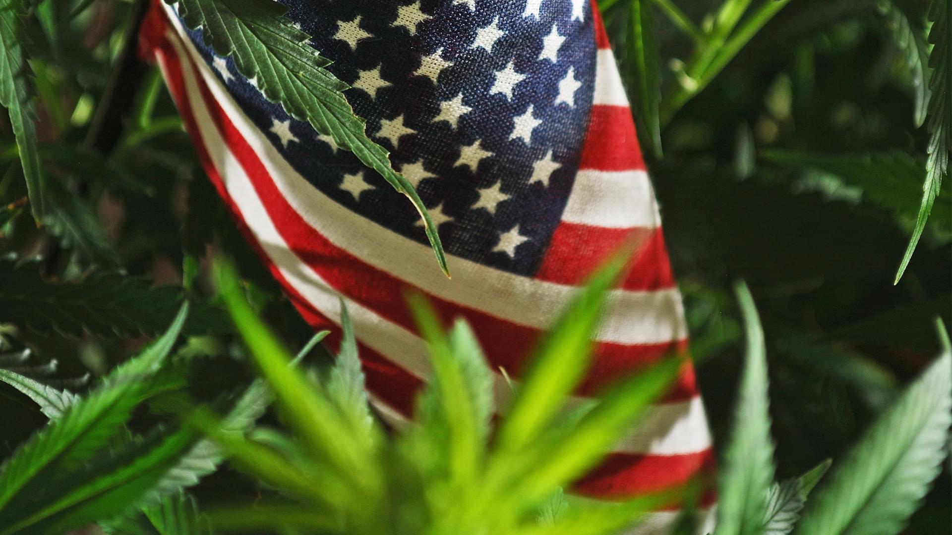 Latest Updates on Marijuana Legalization